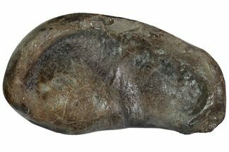 Whale (Unknown Species) - Fossils For Sale - #99975