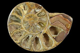 "3.5"" Sliced, Agatized Ammonite Fossil (Half) - Jurassic For Sale, #100547"