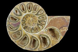 Phylloceratida - Ptychophylloceras? - Fossils For Sale - #100557