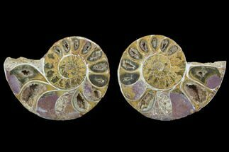 "2.95"" Cut & Polished, Agatized Ammonite Fossil - Jurassic For Sale, #100514"