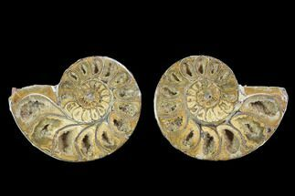 "Buy 3.5"" Cut & Polished, Agatized Ammonite Fossil - Jurassic - #100525"