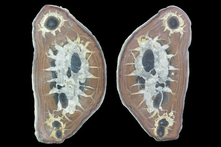 "4.2"" Cut/Polished Septarian Nodule Pair - Morocco"