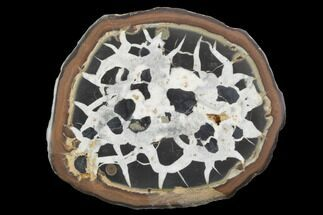 "Buy 3.1"" Cut/Polished Septarian Nodule Half - Morocco - #101311"