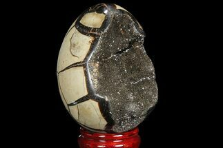 "Buy 4.3"" Septarian ""Dragon Egg"" Geode - Black Crystals - #88504"
