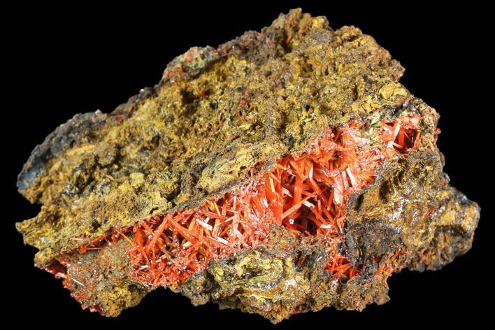 "2.6"" Bright Orange Crocoite Crystal Cluster - Tasmania"