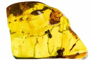 "Buy Huge, 3.2"" Piece Of Amber With Insect Inclusions (61 grams) - Mexico - #104248"