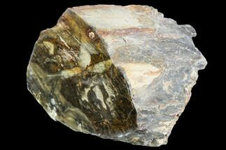 "Buy 5.2"" Polished Petrified Wood Section - Oregon - #104800"
