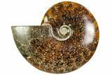 "6.3"" Polished, Agatized Ammonite (Cleoniceras) - Madagascar - #104861-1"