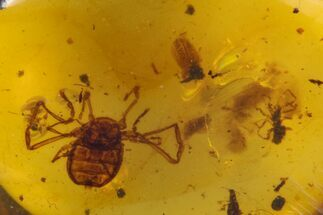 Cretaceous Fossil Insect (Beatle, Spider) in Amber - Myanmar For Sale, #105725