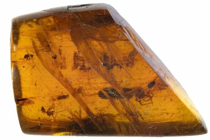 Cretaceous Fossil Insect Cluster in Amber - Myanmar
