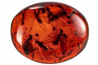 Buy Fossil Termite Cluster In Polished, Red Amber - Myanmar - #107584
