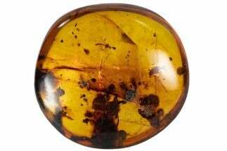 Fossil Beetle And Cranefly Cluster In Amber - Myanmar For Sale, #107621