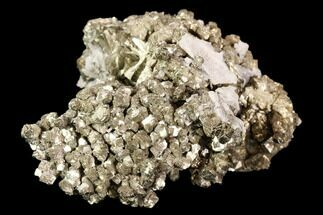 Pyrite & Quartz - Fossils For Sale - #107922