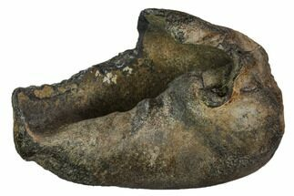 Whale (Unknown Species) - Fossils For Sale - #109251