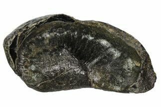 Whale (Unknown Species) - Fossils For Sale - #109263