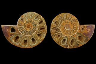 "Buy 3.2"" Cut & Polished, Agatized Ammonite Fossil (Pair)- Jurassic - #110773"