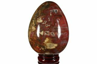 "Buy 5.2"" Colorful, Polished Petrified Wood ""Egg"" - Triassic - #111034"