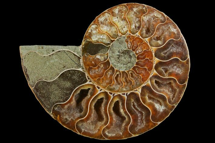 "4.2"" Agatized Ammonite Fossil (Half) - Crystal Chambers"