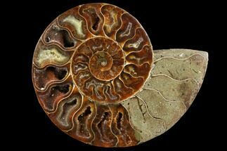 "4.4"" Agatized Ammonite Fossil (Half) - Crystal Chambers For Sale, #111491"