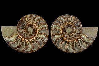 "Buy 4.3"" Agatized Ammonite Fossil (Pair) - Madagascar - #111481"
