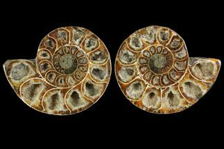 "Buy 4.4"" Agatized Ammonite Fossil (Pair) - Madagascar - #111484"