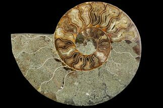 "Buy Bargain, 5.9"" Agatized Ammonite Fossil (Half) - Crystal Chambers - #111544"