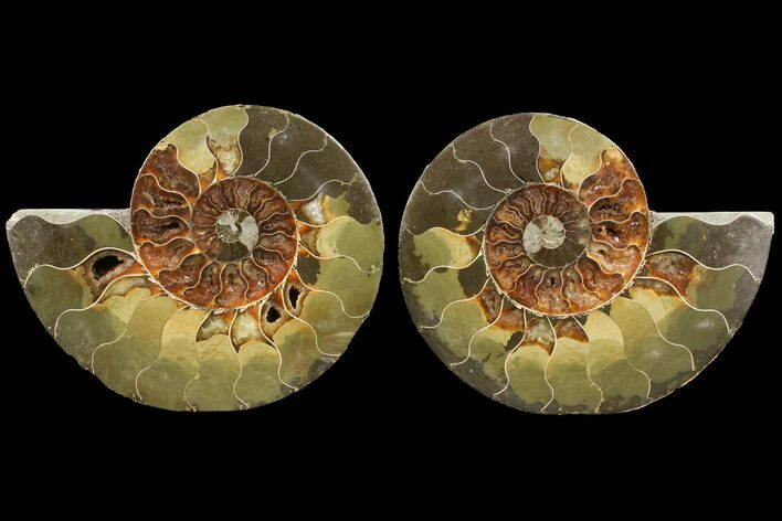 "Bargain, 5.8"" Agatized Ammonite Fossil (Pair) - Madagascar"