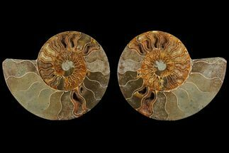 "5.0"" Agatized Ammonite Fossil (Pair) - Madagascar For Sale, #111530"