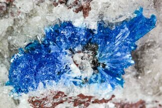 "1.5"" Vibrant Blue Cavansite on Stilbite - India For Sale, #112214"