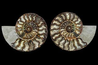 "Buy 7.7"" Agatized Ammonite Fossil (Pair) - Madagascar - #113068"