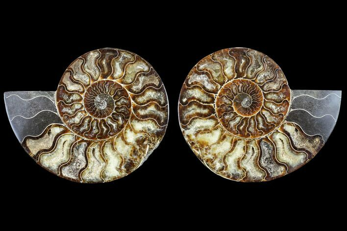 "7.8"" Agatized Ammonite Fossil (Pair) - Madagascar"