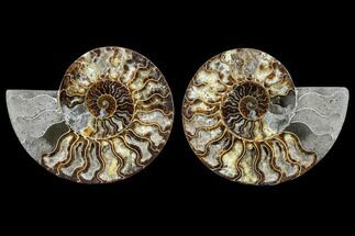 "Buy 7.3"" Agatized Ammonite Fossil (Pair) - Madagascar - #113071"