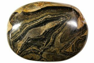 "Buy 2.2"" Polished Stromatolite (Greysonia) Pebble - Bolivia - #113515"