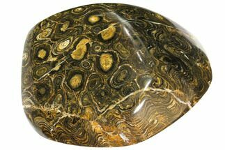 "Buy 4.9"" Polished Stromatolite (Greysonia) - Bolivia - #113587"