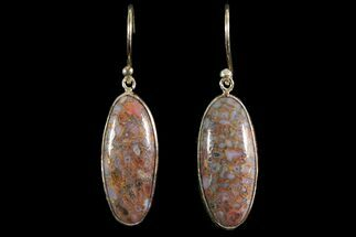 Polished Fossil Dinosaur Bone (Gembone) Earrings For Sale, #115184