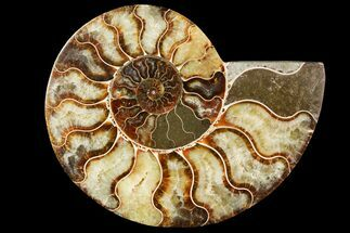 "5.4"" Agatized Ammonite Fossil (Half) - Madagascar For Sale, #115331"
