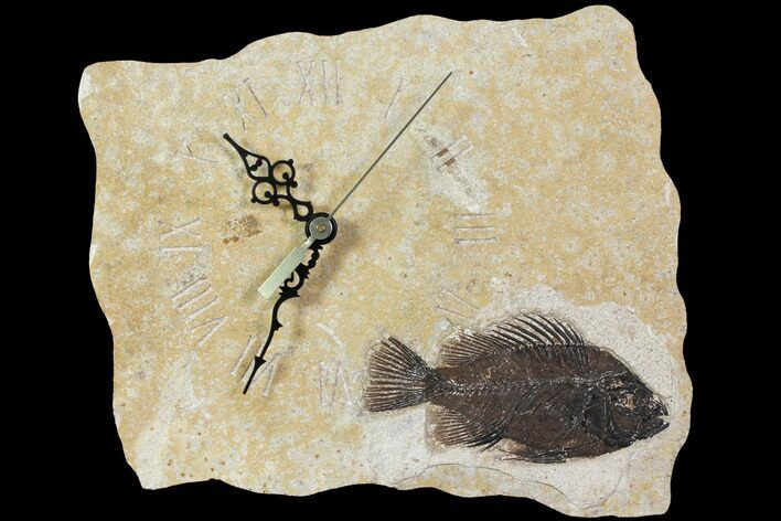 "10.3"" Wide Clock With Cockerellites Fish Fossil - Wyoming"