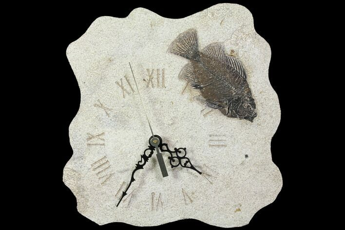 "9.3"" Tall Clock With Cockerellites Fish Fossil - Wyoming"