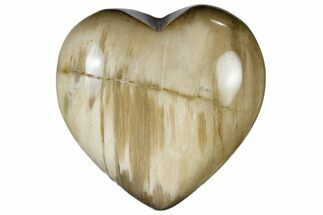 "Buy 1.6"" Polished, Triassic Petrified Wood Heart - Madagascar - #115513"