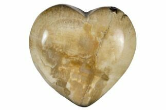 "1.6"" Polished, Triassic Petrified Wood Heart - Madagascar For Sale, #115526"