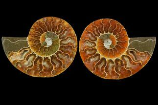 "3.45"" Sliced Ammonite Fossil (Pair) - Agatized For Sale, #116792"