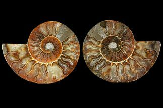 "Buy 4.5"" Sliced Ammonite Fossil (Pair) - Agatized - #114862"