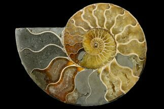 "Buy 4.6"" Agatized Ammonite Fossil (Half) - Madagascar - #114913"