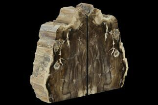 "6.7"" Petrified Wood Bookends - Oregon For Sale, #117227"