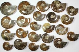 Various - Fossils For Sale - #116625