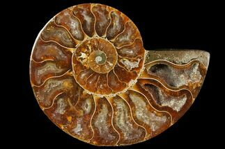 "4"" Agatized Ammonite Fossil (Half) - Madagascar For Sale, #114938"
