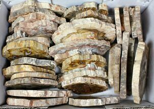 "Buy Wholesale Lot - 3.1 to 5.7"" Petrified Wood Slices - 38 Pieces - #119518"