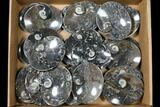 "Wholesale Lot: 4.7"" Oval Dishes With Goniatite Fossils - 25 Pieces - #119335-1"