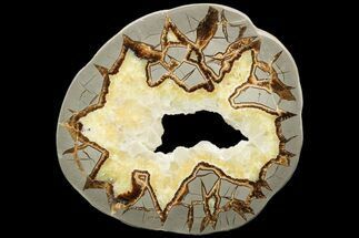 "6.3"" Polished Septarian Slab - Utah For Sale, #119726"