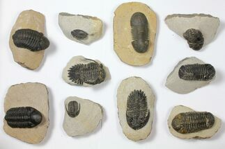 Various - Fossils For Sale - #119865